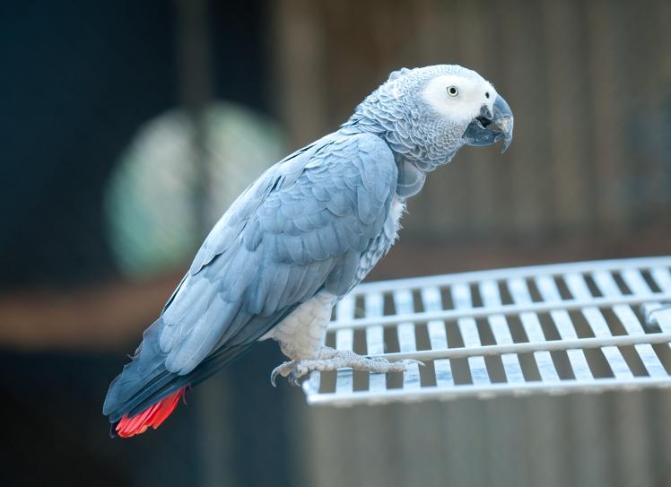 dsc_4505-pretty-bird