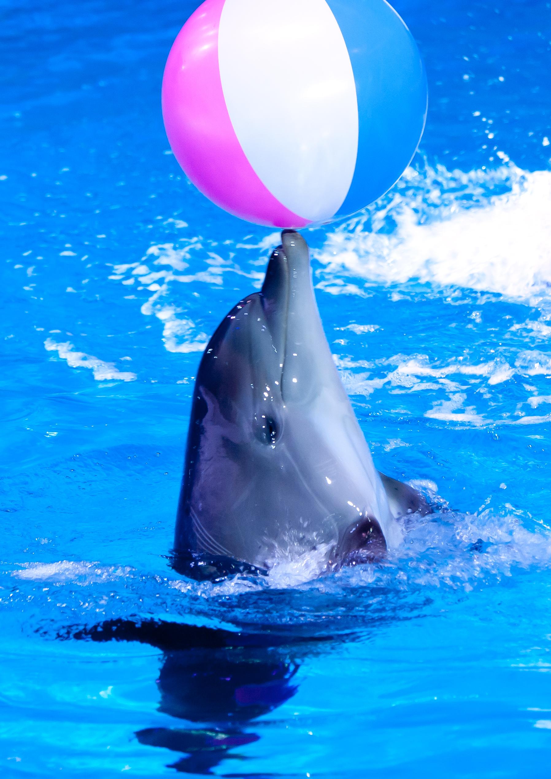 Karadag dolphinarium: description and reviews of tourists